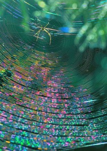Spider silk for fabric