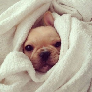 Dog in a towel coat