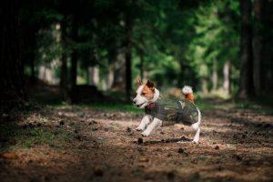 dog in camo coat