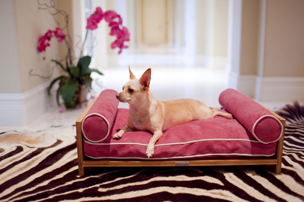 Ways of Using Fabric for your Pets